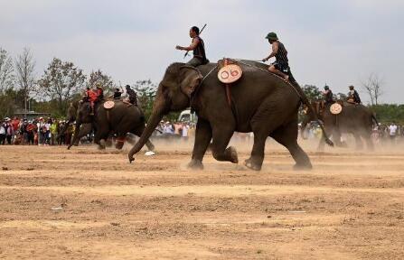 """越南大象""""赛跑"""" 群象齐头并进场面激烈"""