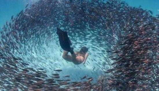 """澳美女潜水员邂逅鱼群""""风暴"""" 仿佛被吸进去一样"""
