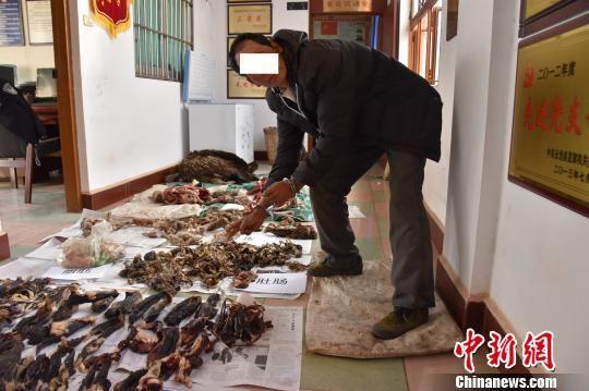 图为查获的高山兀鹫死体及内脏 云龙县森林公安局供图