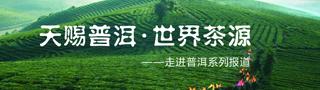 """""""天�n普洱,世界茶源――走�M普洱系列�蟮�"""