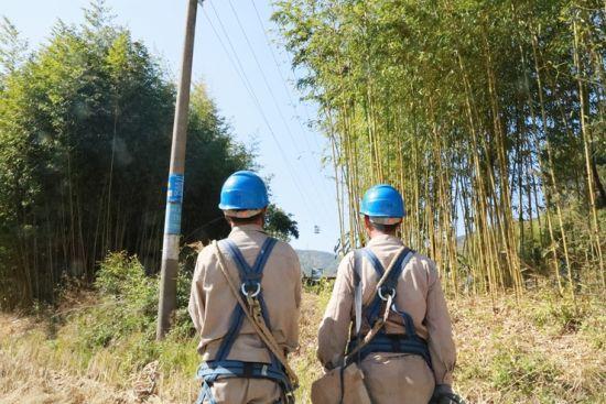 线路经过的竹林,其砍伐工作一度让电力工人苦恼。