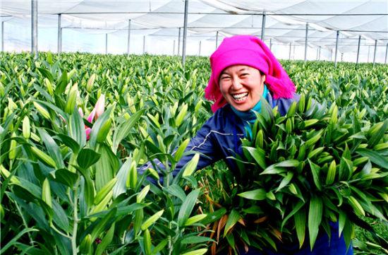 晋宁花卉种植促进了群众增收致富
