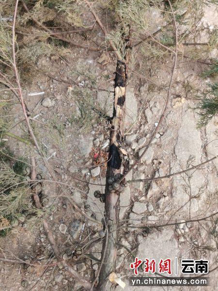 清理下来的树枝有明显的放电痕迹