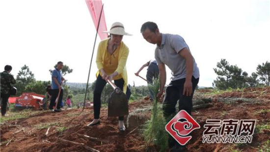 义务植树造林活动现场。