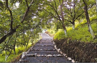光明村核桃林中的休闲步道。记者 徐元锋摄