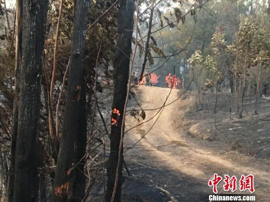 今年春节期间,发生于昆明近郊的森林火灾。 缪超 摄