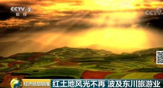 """【聚焦云南】东川红土地大面积扩种三七,""""上帝打翻的调色板""""该不该有斑点?"""