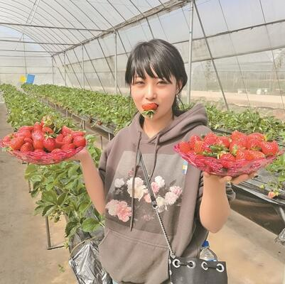 西山区无土栽培冬草莓上市