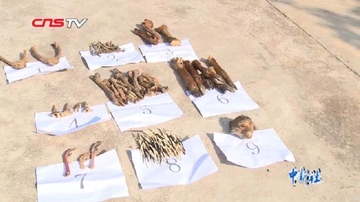 云南景东森警查获各类野生动物制品近百件