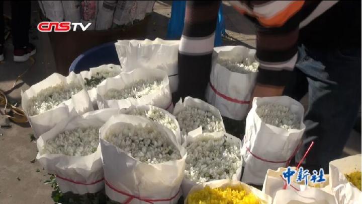 探访云南花卉交易市场 祭扫新风带动花卉热销